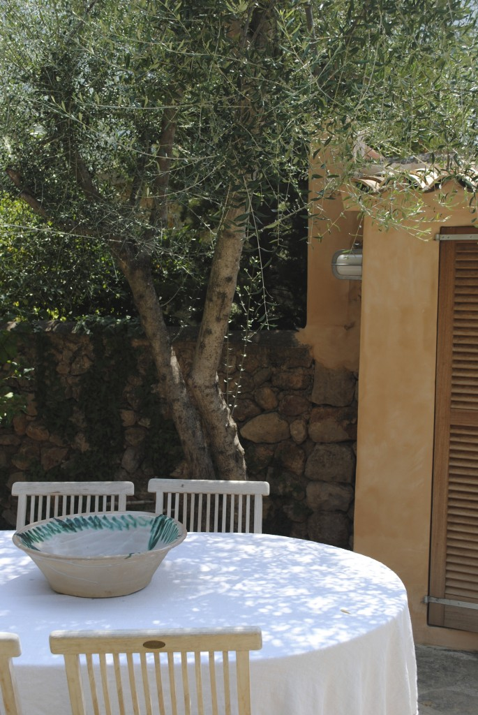 Dining table under the olive tree