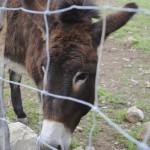 A sweet donkey
