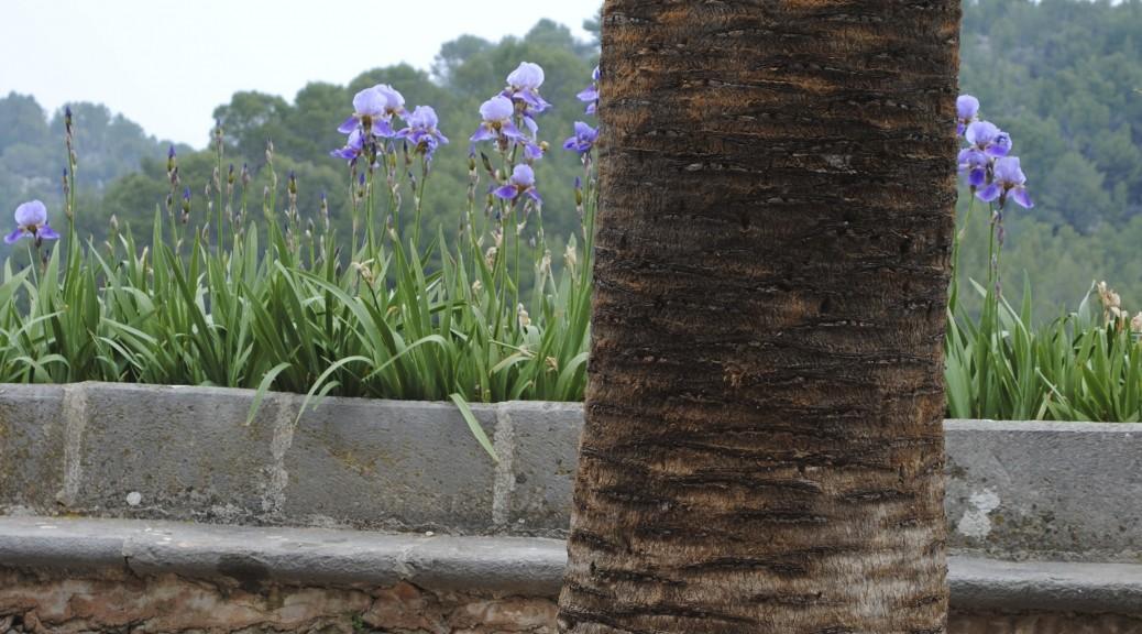 Iris & palmera