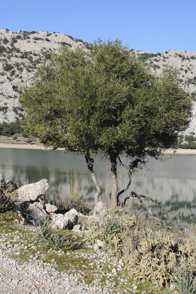 Beautiful tree by the lake
