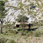 Shelter for the sheep